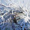 Зимние проблемы деревьев
