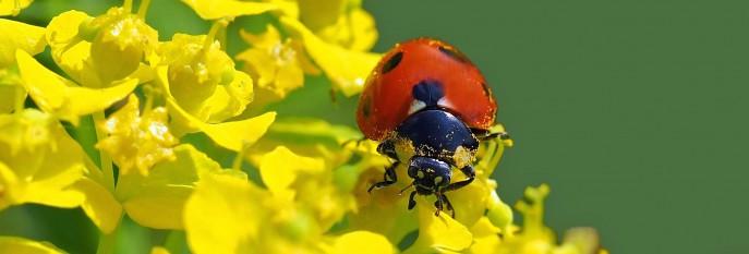 ladybug-1329733
