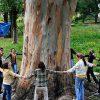Как помочь деревьям жить дружно