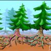Симбиозы у растений