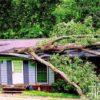 Лесопатологи составили рейтинг самых опасных деревьев