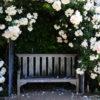 Выбираем не требующие большого ухода растения