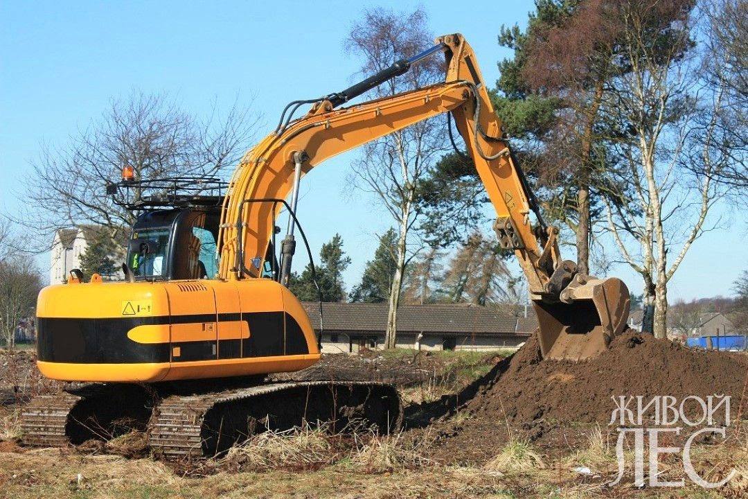 Насыпи грунта над корнями могут привести к печальным последствиям