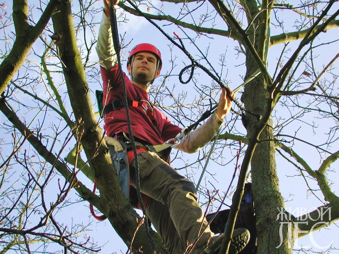 Кобра – защита людей и деревьев