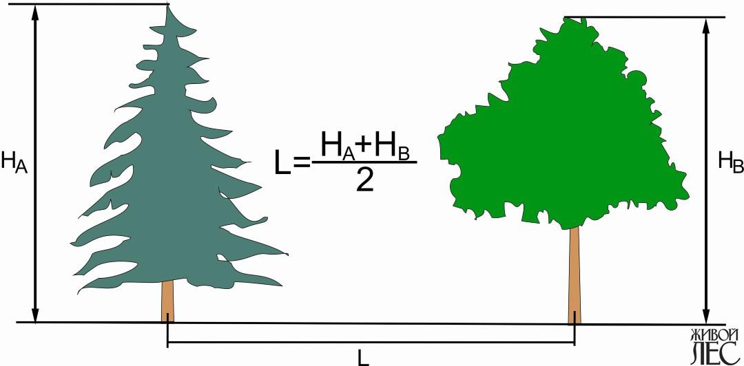 Что можно узнать по кроне дерева? Жизнеспособность деревьев