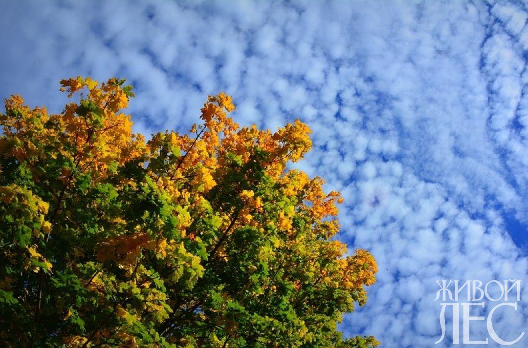 autumn-1504125_960_720