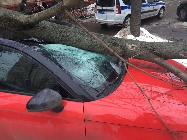 Деревья падают на автомобили не из-за снега, а по вине властей