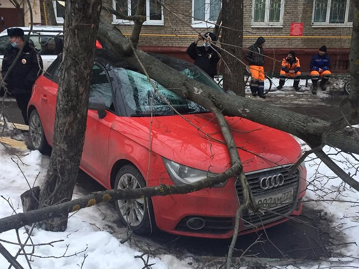 Без шансов: кто заплатит за ремонт, если на автомобиль упало дерево